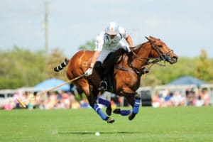 Palm Beach Polo 2018